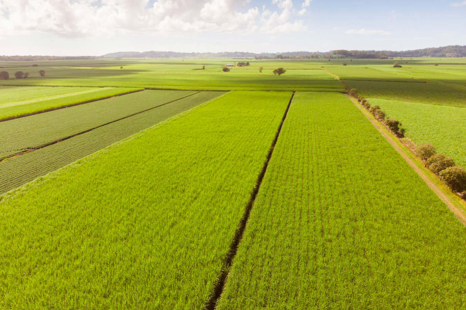 Agriculture_Sectors_1